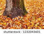 solitary tree with a sea of... | Shutterstock . vector #1232043601