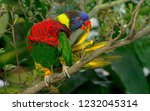 multicolored parrot on a branch | Shutterstock . vector #1232045314