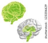 think green  3d brain set   Shutterstock . vector #123206629