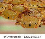crab for cook at market | Shutterstock . vector #1232196184