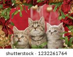 Stock photo three christmas kitten in a golden frame on christmas 1232261764