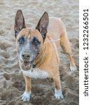 portrait of german shepherd dog ... | Shutterstock . vector #1232266501
