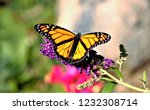 Stock photo monarch butterfly on flower 1232308714