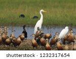 Bird Mixed Colony   Barju Lake...