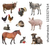 Collage Livestock Isolated White Background - Fine Art prints