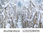 snow covered corn | Shutterstock . vector #1232328454