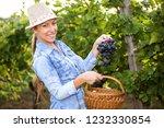 woman in vineyard harvesting... | Shutterstock . vector #1232330854
