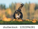 Stock photo funny cat hunting in autumn 1232396281