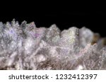 hoarfrost on the branches. ice... | Shutterstock . vector #1232412397