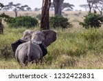 elephants fighting on the... | Shutterstock . vector #1232422831