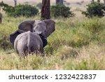elephants fighting on the... | Shutterstock . vector #1232422837