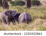 elephants fighting on the... | Shutterstock . vector #1232422861