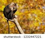 beard ape in german zoo | Shutterstock . vector #1232447221