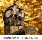 beard ape in german zoo | Shutterstock . vector #1232447251