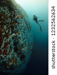great white wall of fiji | Shutterstock . vector #1232562634