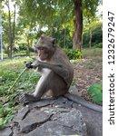 blur closeup the monkey is... | Shutterstock . vector #1232679247