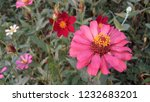 pink and red flower garden from ... | Shutterstock . vector #1232683201