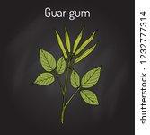 guar gum  cyamopsis... | Shutterstock .eps vector #1232777314
