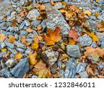 late autumn. bright  leaves on... | Shutterstock . vector #1232846011