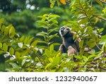 owa jawa  java monkey   endemic ... | Shutterstock . vector #1232940067