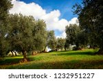 trulli with olive grove.   | Shutterstock . vector #1232951227