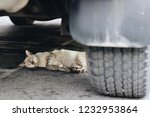 the cat was hit by a car in the ... | Shutterstock . vector #1232953864