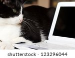 Stock photo technological cat with laptop 123296044