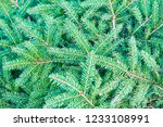 christmas fir tree branches ... | Shutterstock . vector #1233108991
