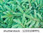 christmas fir tree branches ... | Shutterstock . vector #1233108991