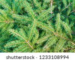christmas fir tree branches ... | Shutterstock . vector #1233108994