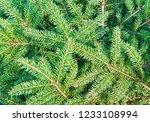 christmas fir tree branches ... | Shutterstock . vector #1233108994