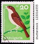 bulgaria   circa 1965  a stamp... | Shutterstock . vector #123316555