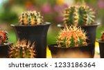 still life photography of... | Shutterstock . vector #1233186364
