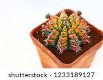 beautiful gymnocalycium... | Shutterstock . vector #1233189127