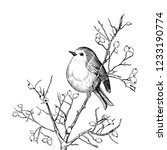 robin. hand drawn vector... | Shutterstock .eps vector #1233190774