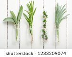 lavender  thyme and sage fresh... | Shutterstock . vector #1233209074