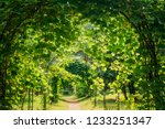 beautiful alley in park.... | Shutterstock . vector #1233251347