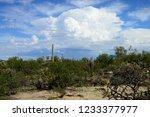 the sonora desert in central... | Shutterstock . vector #1233377977