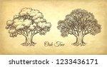 ink sketch of two oaks. winter... | Shutterstock .eps vector #1233436171