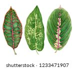 set leaves of tropical plants ... | Shutterstock . vector #1233471907