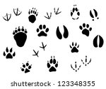 animal footprints and tracks... | Shutterstock . vector #123348355