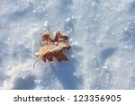 Simple Sunny Frozen Leaf On Th...