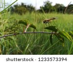 southern african insects | Shutterstock . vector #1233573394
