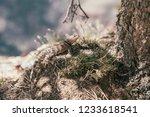 wild animal wildlife concept in ... | Shutterstock . vector #1233618541