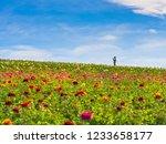Spring Flowers In San Diego