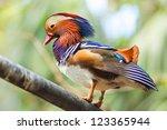 Colorful Mandarin Duck On Wood...