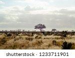 solitary tree landscape in...   Shutterstock . vector #1233711901