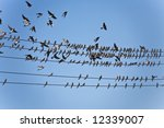 bird series  flock of martin... | Shutterstock . vector #12339007