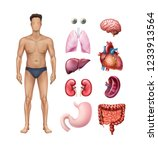 male body template with human... | Shutterstock .eps vector #1233913564