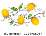 fruit composition with fresh...   Shutterstock . vector #1233966067